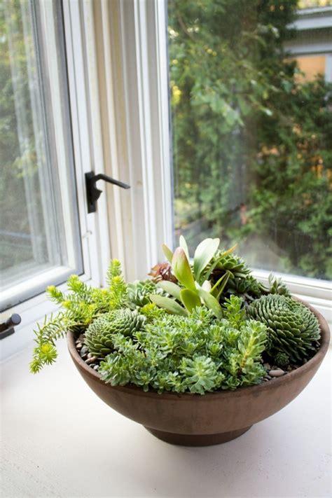 pflanzen für wohnung hngende zimmerpflanzen deko ideen blumenel topfpflanzen