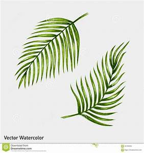 Watercolor Tropical Palm Leaves. Stock Vector - Image ...