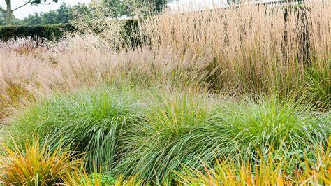 transplanting ornamental grass 5 ways to design with ornamental grasses grow beautifully