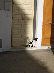 Da Ist Die Tür : t rkratzen bei katzen das k nnen sie tun ~ Watch28wear.com Haus und Dekorationen