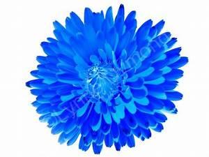 Blue Flower on White | Flickr - Photo Sharing!