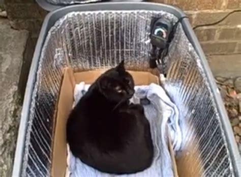 outdoor cat shelter diy diy heated cat shelter petdiys