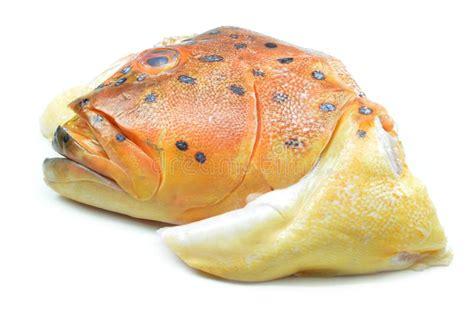 head fish grouper