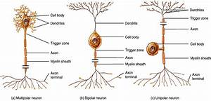 image structural_neurons for term side of card