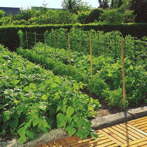 2m Trellis by Pea Bean Climbing Plant Trellis Support Nets Netting Fence