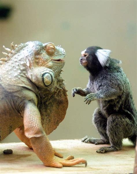 20+ Unusual Animal Friendships That Are Absolutely