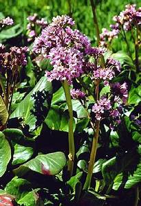 Pflanzen Bestimmen Nach Bildern : pflanzen f r saure b den ~ Eleganceandgraceweddings.com Haus und Dekorationen