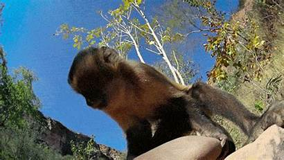 Animals Wild Smash Nature Pbs Monkey Giphy