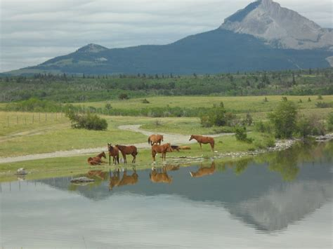 montana wild horses distance lake grazing tcc designs taken these