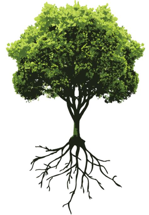 Transparent Tree with Roots