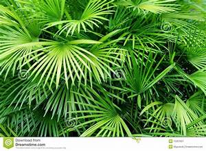 Palm Leaves Background Stock Image