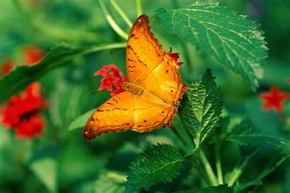 Butterfly Wallpapers Malaysia Desktop Places