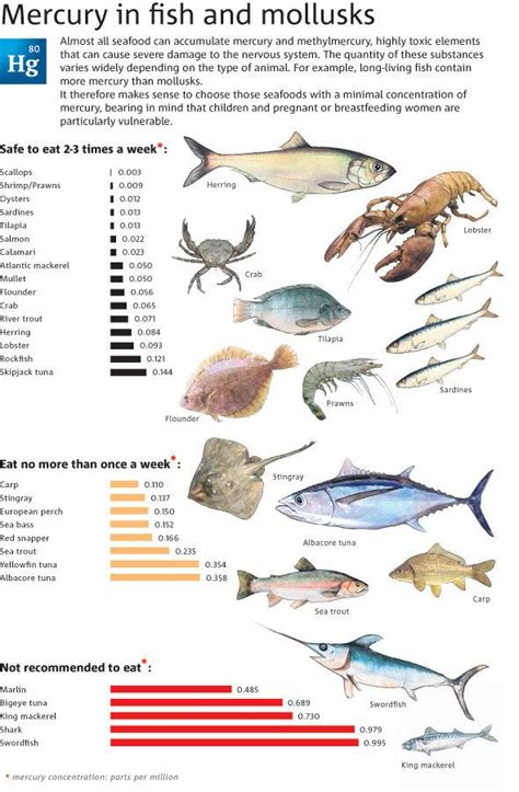 mercury levels  fish  mollusks  aware