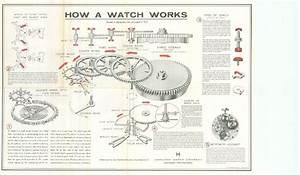 Mechanical Watch Diagram