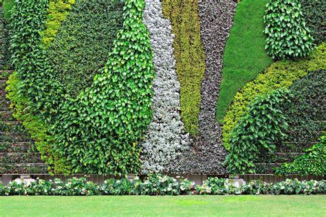 vertical garden history   plants  walls