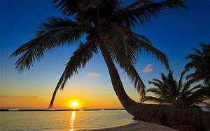 Sunset sea palm trees beaches wallpaper | 2560x1600 ...