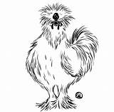 Silkie Chicken Drawing Chickens Kale Drawings Salad Much Draw Too Lady Cartoon Painting Sketches sketch template