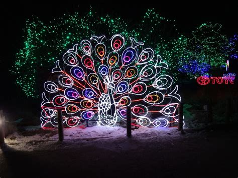 denver zoo lights december 30 2013