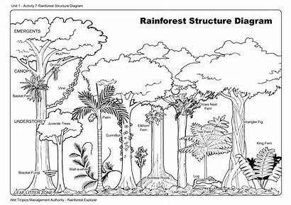 Rainforest Diagram Structure Worksheets Trees Tree Worksheet
