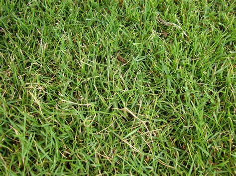 list of types of grass 5 popular grass types in nashville tn lawnstarter