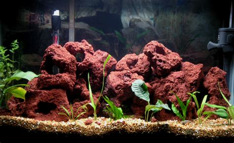Spencers Lava L Fish Tank by Cichlids Tank Exles My Planted Malawi Tank