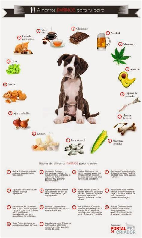 Alimentos Prohibidos Para Tu Perro Mascotas