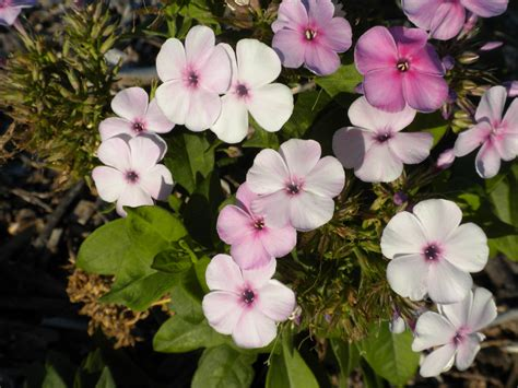flowers to plant in summer blooming perennials for the southeast texas gulf coast orange county master gardeners