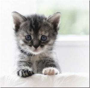 Really Cute Kitten | dailykitten.catsbe.com | Pinterest