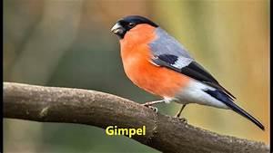Singvögel Im Garten : unsere singv gel youtube ~ Whattoseeinmadrid.com Haus und Dekorationen