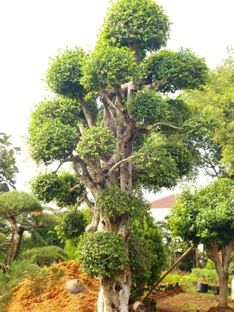 roempoen bamboe garden tentang