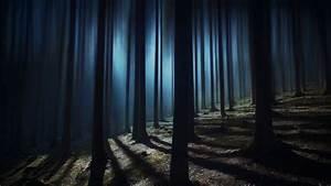 Dark, Forest, 4k, Wallpaper, Woods, Night, Time, Dark, Shadow, Tall, Trees, Haunted, Mystery, 5k