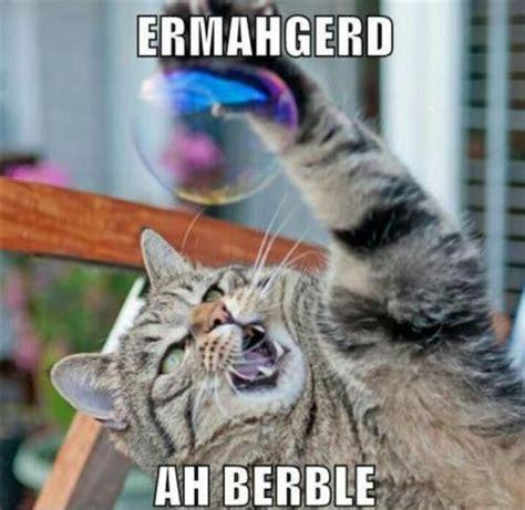 Funny Cat Memes Tumblr - funny cat meme on tumblr
