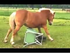 Funny Horse Videos Com...
