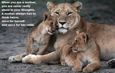 Mother Lion And Cub Quotes
