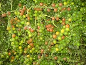 what are the finest photographs to use on pepper spices kerala photographs a cash crop of kerala