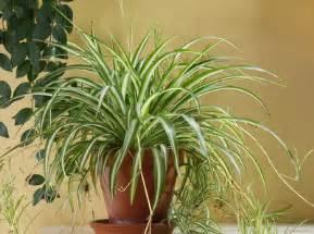 pflanzen fürs schlafzimmer pflanzen fürs schlafzimmer welche sind geeignet