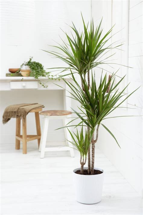 Best 25+ Tropical House Plants Ideas On Pinterest Leaves