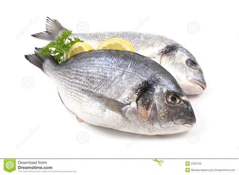 dorade cuisine dorada fish stock image image of parsley fish fishes
