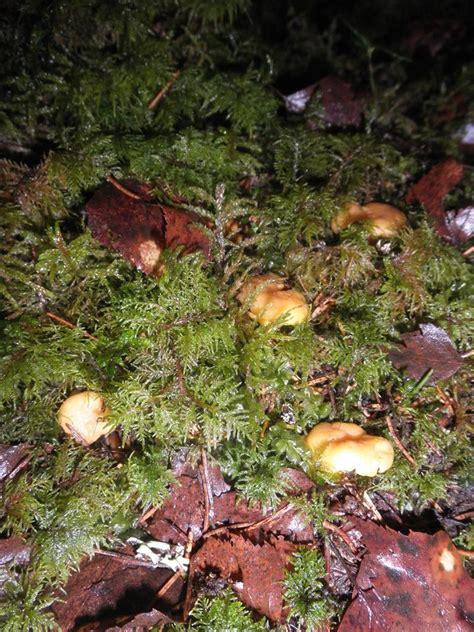 Ziemassvētku brīnums - decembrī Latvijas mežos salasītas ...