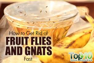 Drain Flies In My Bathroom by How To Get Rid Of Fruit Flies And Gnats Fast Top 10 Home