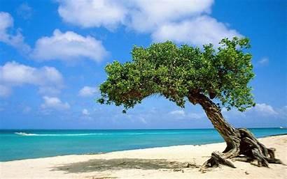 Desktop Aruba Beach Wallpapers Beaches Pixelstalk Sand