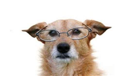 where to adopt a puppy el perro viejo