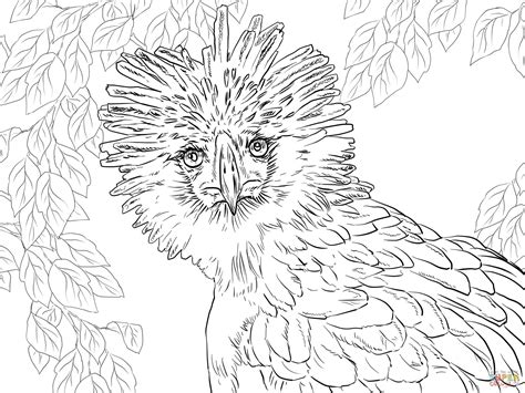 endangered species coloring pages  getcoloringscom  printable colorings pages  print