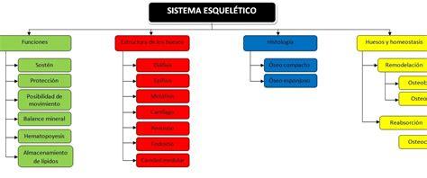 Biología Humana: SISTEMA LOCOMOTOR