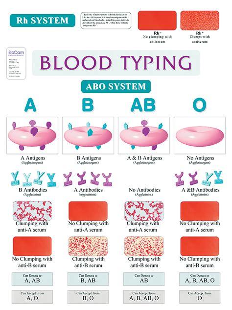 abo blood typing wall chart