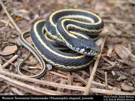 how to get rid of garden snakes how you get rid of snakes proven methods snakes and spiders