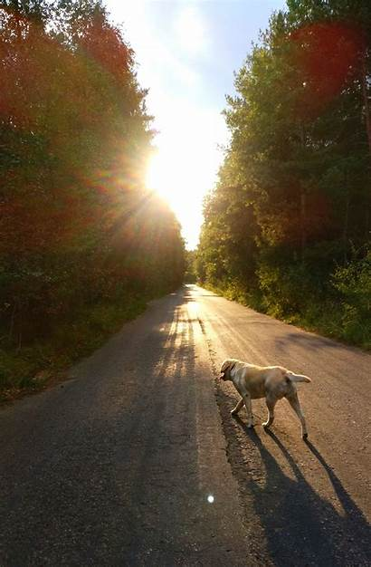 Portrait Road Dog Landscape Pemandangan Poland Display