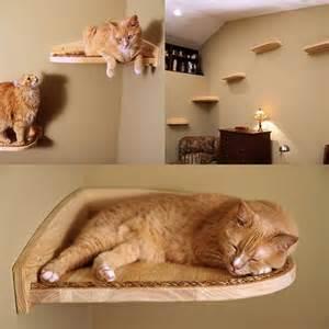cat climber 25 best ideas about cat climbing shelves on