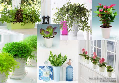 plantes de salle de bain univers creatifs les plantes qui font du bien 224 notre int 233 rieur