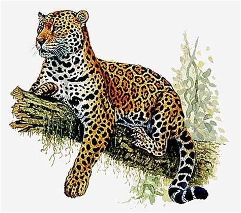 editions sud ouest cuisine encyclopédie larousse en ligne jaguar